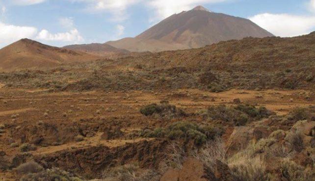 Viaje a Canarias. Aves y paisajes de la Macaronesia