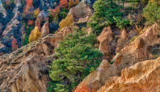 Taller fotográfico en la Cerdanya con Quim Dasquens. Los colores de otoño