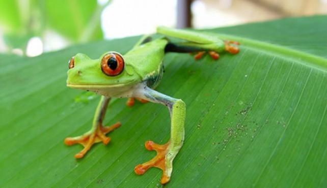 Viaje a Costa Rica. Fotográfico. Safari fotográfico