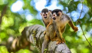 Viaje a Costa Rica. A Medida. Descubriendo tesoros naturales