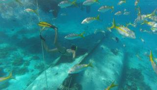 Viaje a Cuba. En grupo. Habana y los Cayos en Catamarán