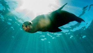 Viaje a Ecuador. Grupo garantizado a partir de 2 personas. Natural experience: Las Islas Galápagos