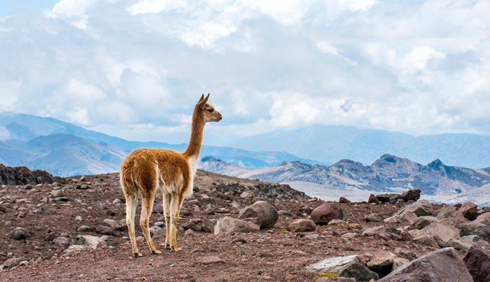 Viaje a Ecuador a medida