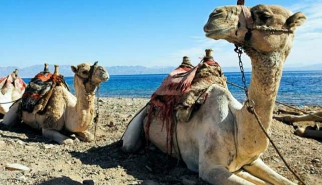 Viajar a Egipto a medida en privado