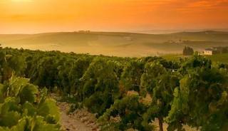 Enoturismo en Jerez de la Frontera