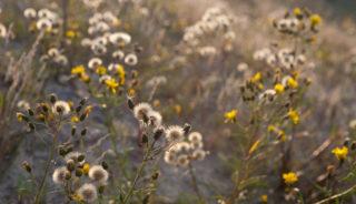 Viaje a Estonia, Letonia y Lituania. Grupo verano. Singles. Viaja solo. Capitales bálticas