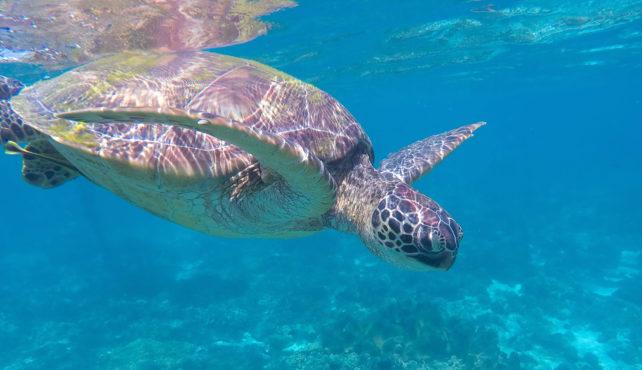 Viaje a Filipinas. A medida. Especial amantes del mar.