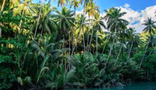 Viaje a Filipinas. A Medida. Las mejores islas de Filipinas: Las Visayas y Palawan