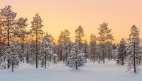 Viaje a Finlandia y Estonia. Laponia exclusiva