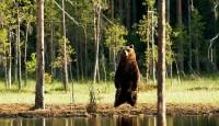 Viaje a Finlandia Fotográfico