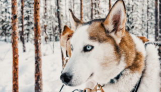 Viaje a Finlandia. Navidad. Viaje a Laponia – Salla, especial fin de año