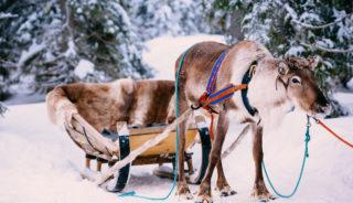 Viaje a Finlandia. Puente de diciembre. Viaje a Laponia – Holiday Club Resort Salla