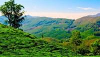 Viaje a India del sur. La ruta de las plantaciones