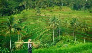 Viaje a Indonesia. Grupo verano. Selamat Datang