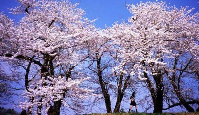 Viaje a Japón. Fotográfico