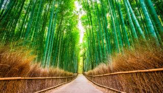 Viaje a Japón. A medida