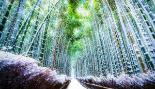 Viaje a Japón. Navidad. En grupo