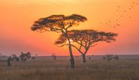 Viaje a Kenya y Tanzania. Semana Santa. En camión. El sueño de África premium en camión