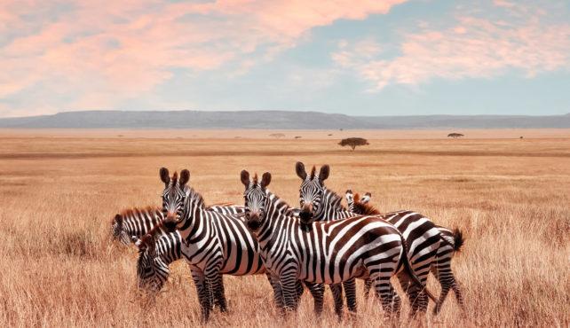 Viaje a Kenia. En grupo. Safari en 4x4 con posibilidad de extensión a Zanzíbar