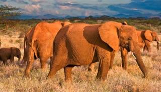 Viaje a Kenia en grupo. Territorio Masai