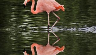 Viaje a Kenya. Safari Kongoni. Ext opcionales a Zanzíbar, Mauricio o Seychelles