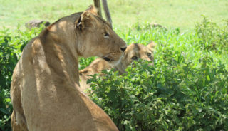 Viaje a Kenya, Tanzania y Zanzíbar. En Grupo. Ruta Memorias de África Aventura en camión