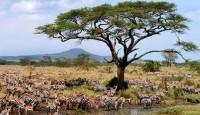 Viaje a Kenia, Tanzania y Zanzíbar. Ruta Memorias de África Clásico en camión