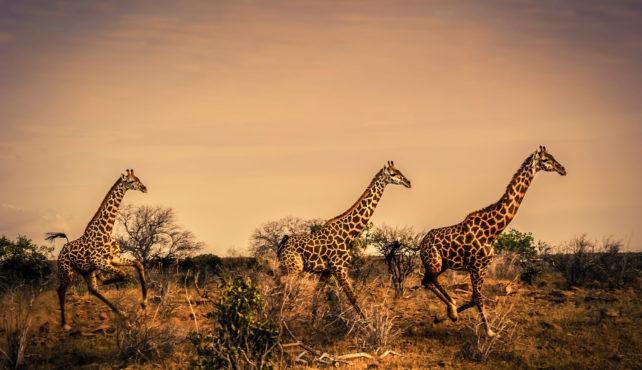 Viaje a Kenya. Aventura en camión