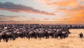 Viaje a Kenya con Maldivas. En grupo. Safari de Kenya y Maldivas 13 días. Con posibilidad de realizarlo en privado