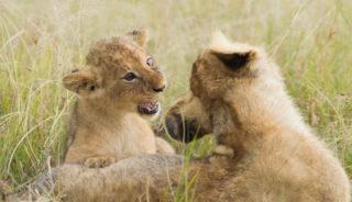 Viaje a Kenya con Maldivas. En grupo. Safari de Kenya y Maldivas 12 días. Con posibilidad de realizarlo en privado