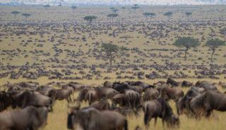 Viaje a Kenya y Tanzania. Grupo privado a partir de 2 personas. Classic Safari Nyota en 4x4