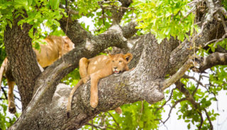 Viaje a Kenya, Tanzania y Zanzíbar. En grupo, El sueño de áfrica premium. En camión