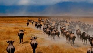 Viaje a Kenya, Tanzania y Zanzíbar. En Grupo. La gran migración en camión