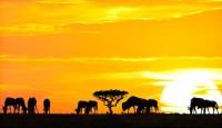 Viaje a Kenia, Tanzania y Zanzíbar. En grupo. El sueño de África Premium. Fin de año en Masai Mara