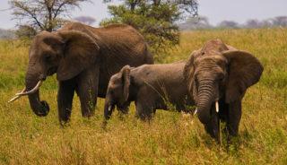 Viaje a Kenya, Tanzania y Zanzíbar. En camión. Ruta Memorias de África Clásico 15 días