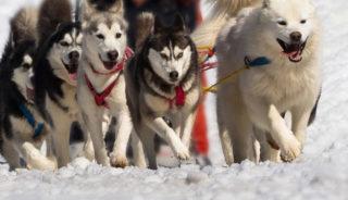 Viaje a Laponia Finlandesa. Puente Diciembre