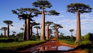 viaje a  Madagascar grupo verano taranna