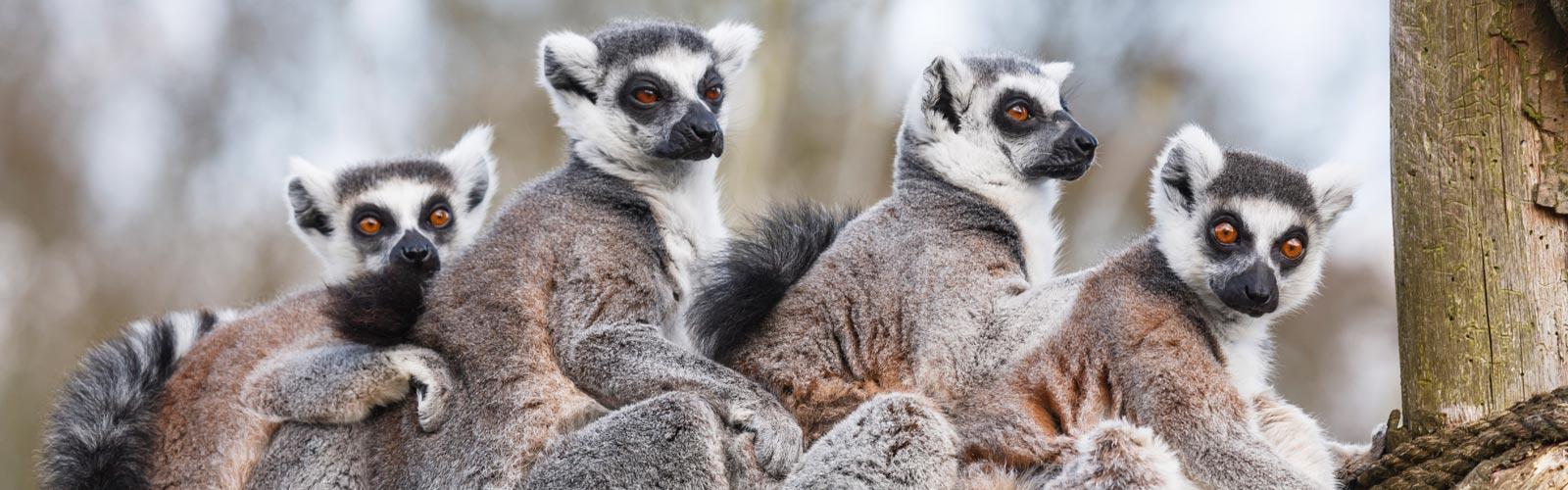Viaje a Madagascar. 4 Ago.