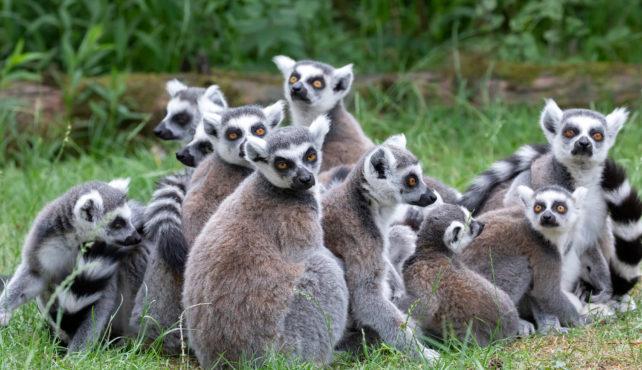 Viaje a Madagascar Gran Norte Medida