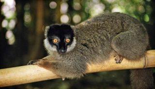 Viaje a Madagascar. A medida. Circuito Andasibe y Sur