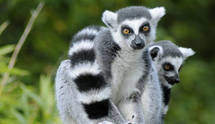 Viajes a Madagascar a medida