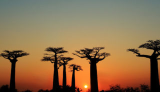 Viaje a Madagascar. Descubre Madagascar