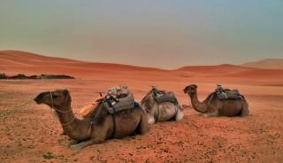 viaje a marruecos. En grupo