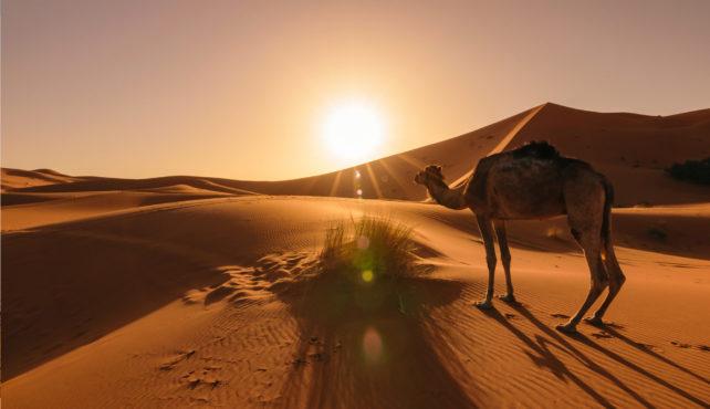 Viaje a Marruecos. Semana Santa. Singles. Viaja Solo. Desierto y playa