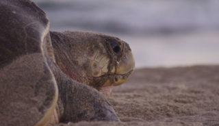 Viaje a México sostenible. Grupo Verano. Liberación y cuidado de tortugas y ruta ecoturística
