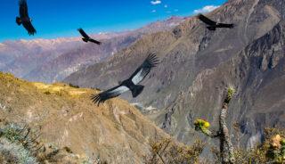 Viaje a Perú. A medida nomads. Convicencia local en el Cañón del Colca y el Lago Tititcaca
