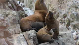 Viaje a Perú. Singles. Viaja solo. Imperio Inca