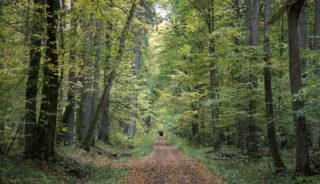 Viaje de autor a Polonia. En Grupo. Bialowieza, joya natural de Europa con Jordi Canal-Soler