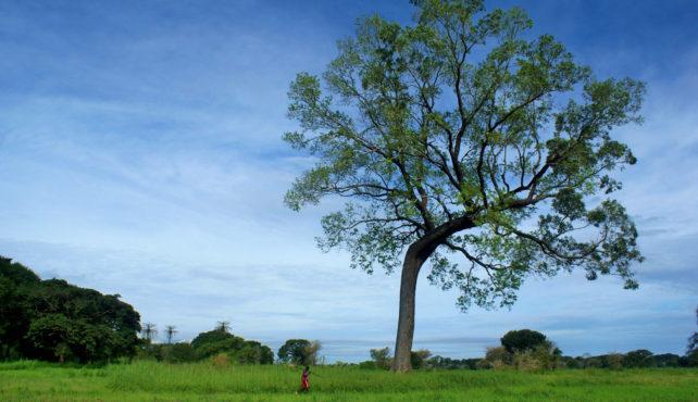 Viaje a Senegal y Gambia sostenible. Tierra de Baobabs