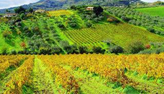 Viaje a Italia. En grupo. Gastro & enoturismo en Sicilia con guía acompañante Montse Ferrer